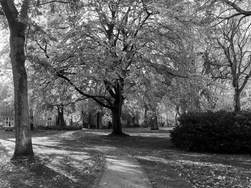 August-Lütgens-Park und HausDrei Altona Altona-Altstadt altonaSTORY